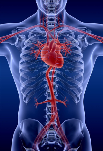 CoQ10 May Help To Protect Against Heart Disease