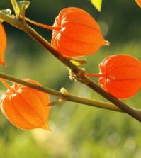 5 Reasons To Love Ashwagandha | www.naturallyhealthynews.com
