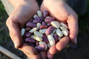 Eating Legumes May Increase Fullness and Support Weight Loss | www.naturallyhealthynews.com