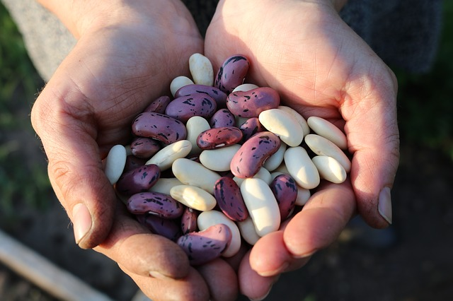 Eating Legumes May Increase Fullness and Support Weight Loss