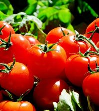 Eating Tomatoes Could Slash Your Skin Cancer Risk In Half | www.naturallyhealthynews.com