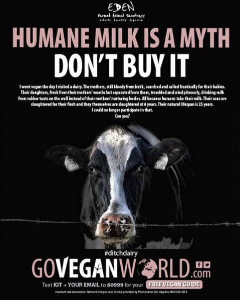 Why 'Humane Milk' Is A Myth And More Healthy Reasons To Ditch Dairy