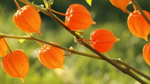 3 Unbelievable Ways That Ashwagandha Can Benefit Your Health | www.naturallyhealthynews.com