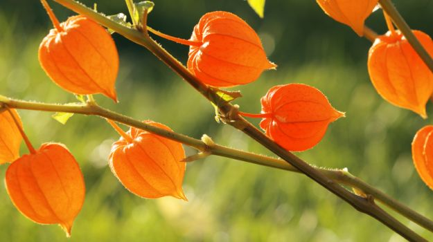 3 Unbelievable Ways That Ashwagandha Can Benefit Your Health