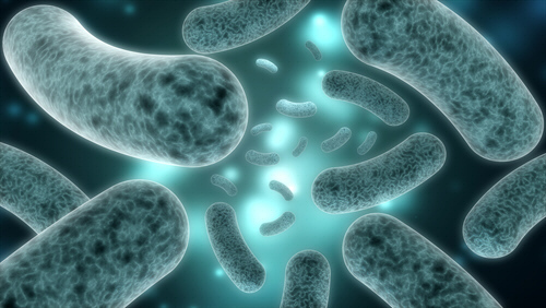 Healthy Gut Bacteria Protects Against Type 2 Diabetes