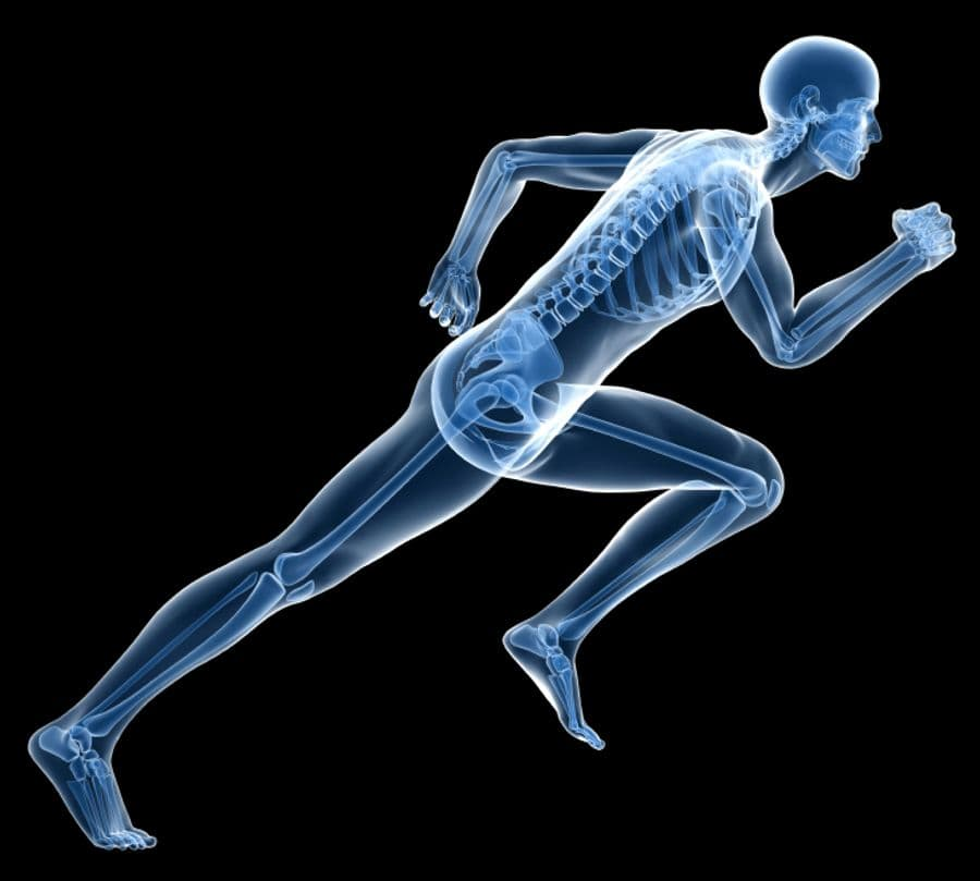 CoQ10 May Support And Preserve Good Bone Health