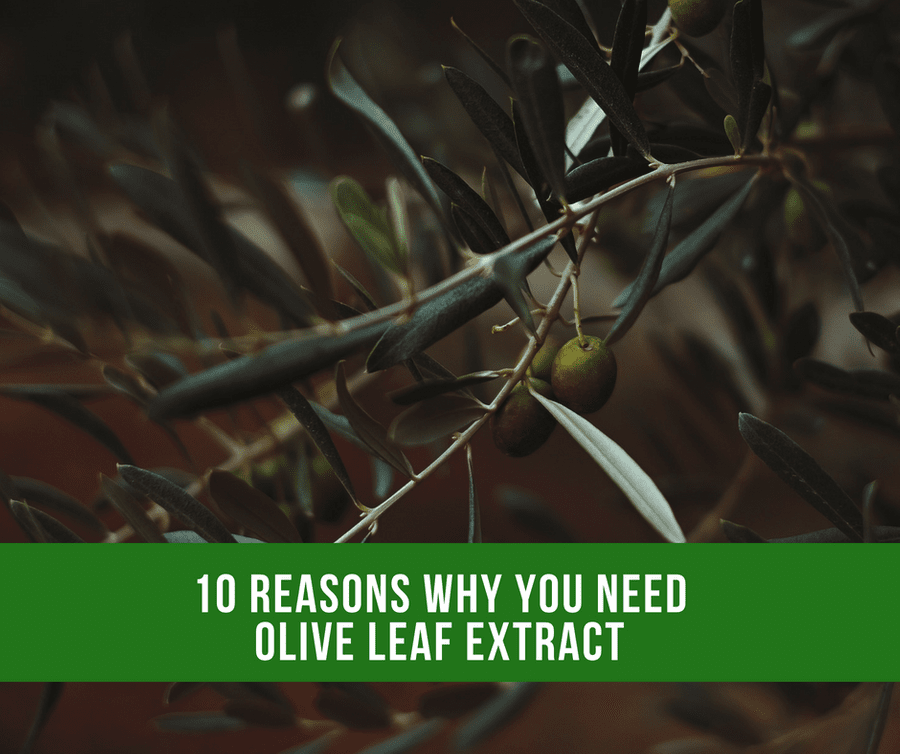 10 Reasons Why You Should Take Olive Leaf Extract For Best Health