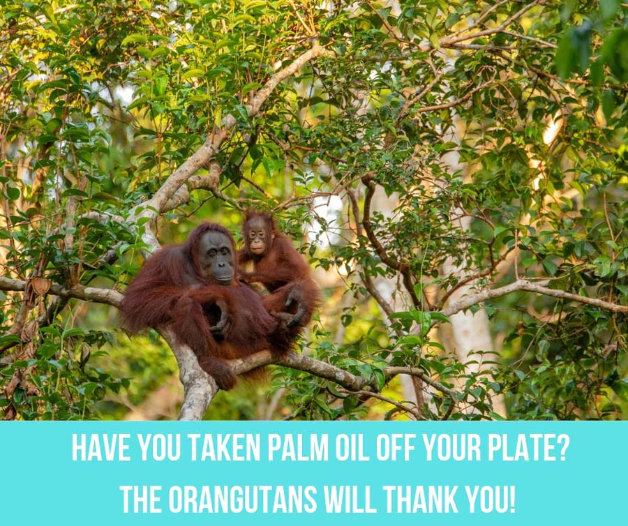 Have You Taken Palm Oil Off Your Plate? (The Orangutans Will Thank You!)