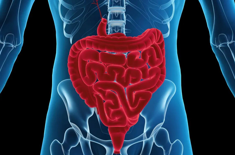 WEEK 49 (2019) – Clear Crohn's & Colitis, Fast