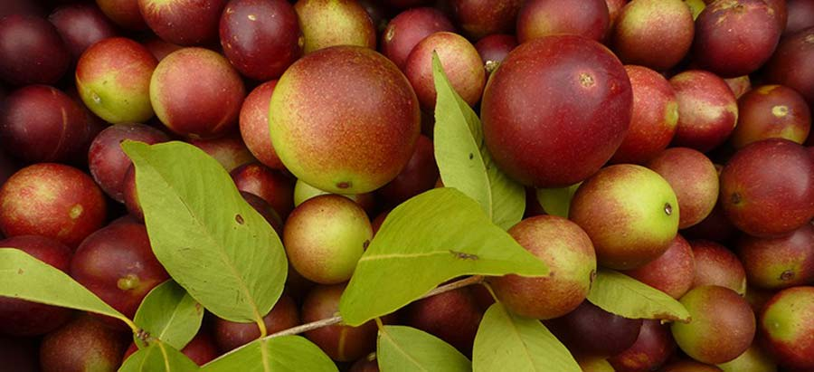 What is Camu Camu? And Why You Should Try This Superfruit For Good Health